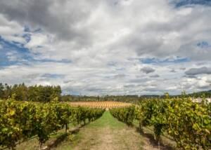 Quinta De Santiago Vineyards