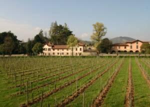 vineyard and building of ricci curbastro