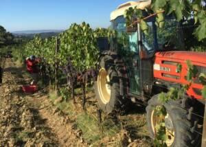 Vineyard Of The Rocca Di Montegrossi Winery
