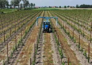 a tracktor ploughing the farm of san martino coluccivini