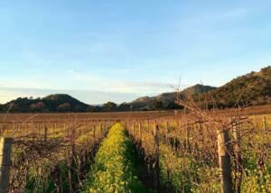 Vineyard Of The T-Vine Winery