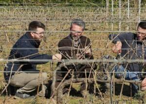 staffs of terre del marchesato working in the vineyard