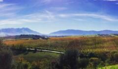 Beautiful Vineyards of Tiberio