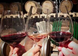 Wine Tasting at Uou Konzorcij Zapuscenih Vinogradov