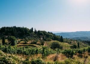 vineyard of vecchie terre di montefili on hilltop