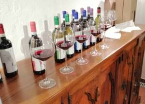 Rows Of Wine Botlles At Vigna Riccardo