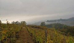 Vineyardof The Vigna Riccardo Winery