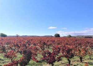 Vineyard Of The Viña Pedrosa Winery