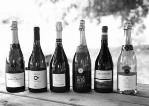 A Beautiful Display of Vins El Wine Bottles