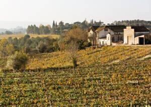 Vineyards of Vins El Cep