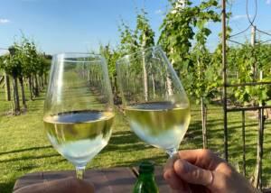 Tasting At The Weingut Alois Höllerer Winery