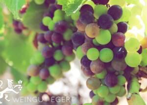 Grapes at Weingut Egert