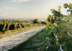 VIneyards of Weinut Egert