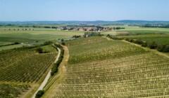 Vineyard of Weingut Hebenstreit