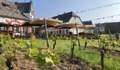 Vineyard of Weingut Kreis Gbr