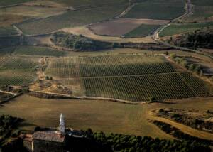 Aerial View of Barbara Palacios Vineyards