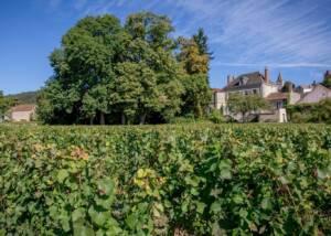 Domaine Chargarnier Vineyards