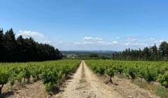 Domaine Des Pentelines Vineyards