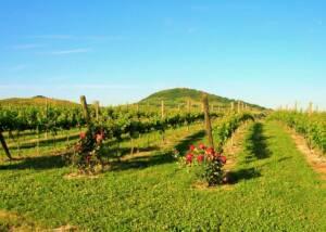 beautiful landscape around Fattoria Colmone Della Marca winery