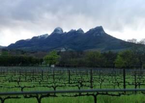 Vineyards at Ken Forrester Wines