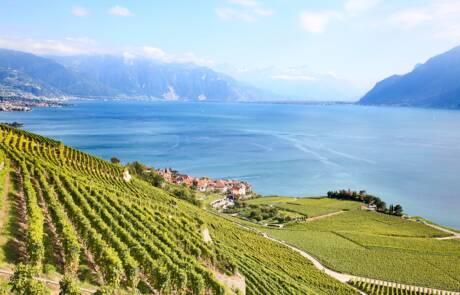 Vaud wine region