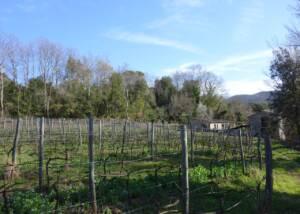 Mulini di Segalari Società Agricola s.n.c Vineyards