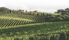 Vineyards at Quinta De Sant'Ana