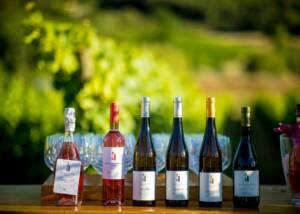 A Range of Quinta De Sant'Ana Wine Bottles