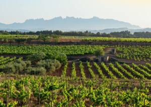 Vineyards of Recaredo