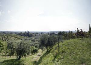Tenuta Baron Winery Vineyards