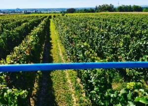 Vinarija Trdenic Vineyards