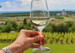 Wine Tasting at Vinarija Trdenic
