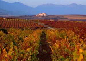 Bodegas Landaluce Vineyards