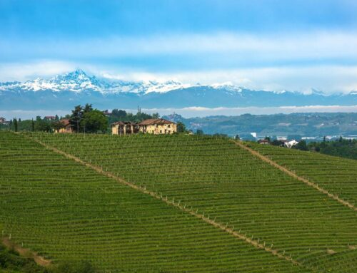 Barolo – The King of Wines