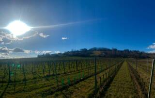 Vineyards at Weingut Christ