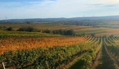 Weingut Walter Glatzer Vineyards