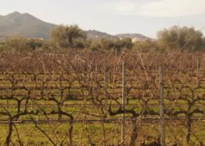 Biopaumera Vineyards