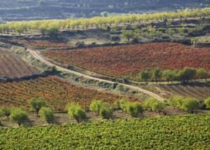 Vineyards of Bodegas Marqués de Reinosa