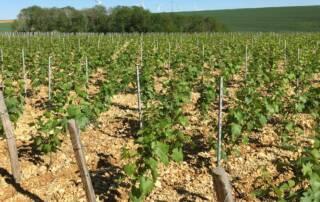 Domaine Boussard Vineyards