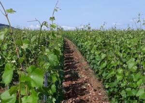 Domaine Serrigny Francine & Marie-Laure Vineyards