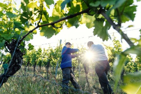 Weingut-Höfling_winery_franken_germany