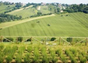 Tenuta San Marcello Estates