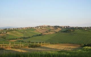 Tenuta San Marcello Vineyards