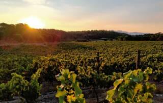 Terra Remota Vineyards