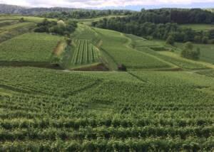 Weinmanufaktur Mario Josef Burkhart Wines Vineyards