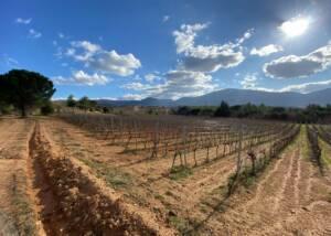 Vineyards at Ktima Tselepos