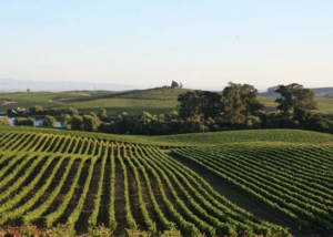 The Perinet Vineyards