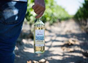 Bottle of Antica Enotria Wine