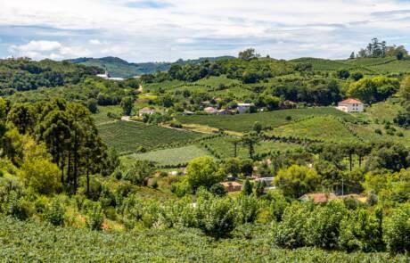 Serra Gaúcha wine region