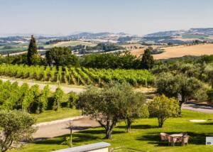 The Estates of Cantina Todini